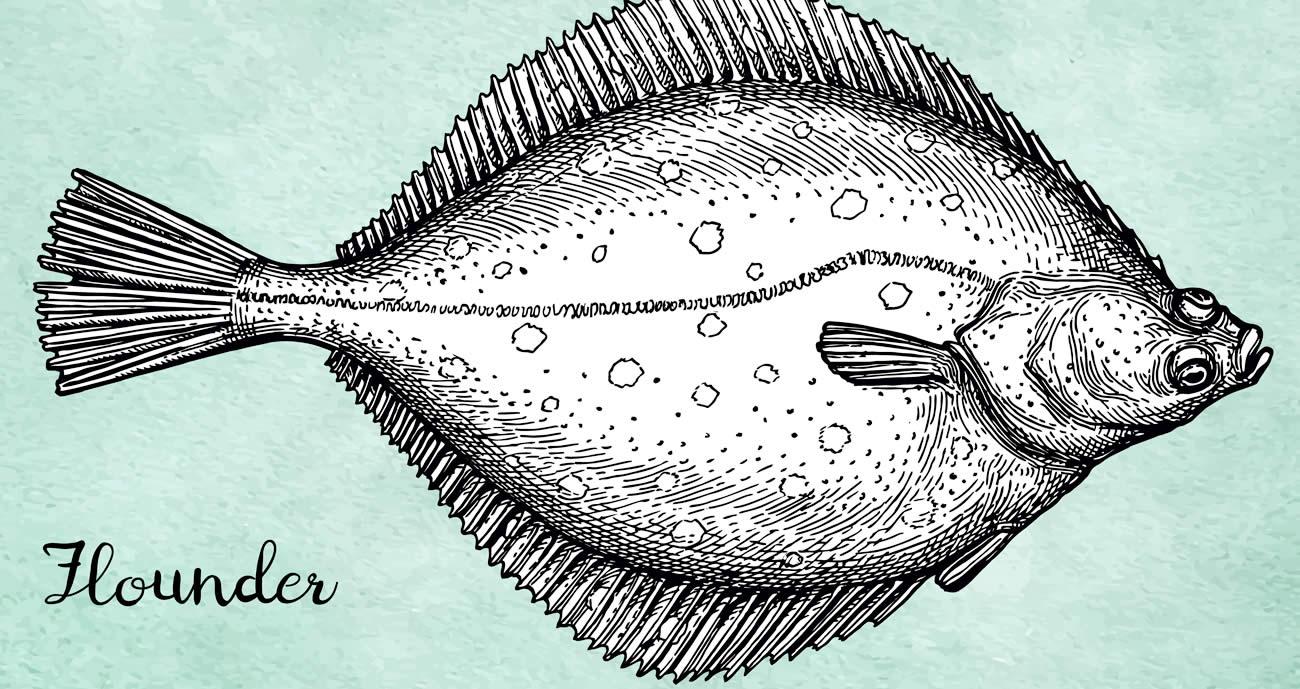 早漏のヒラメ伝説